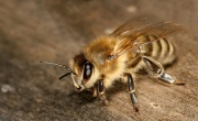 Напечатанные ульи для пчел