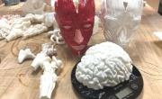 реальные анатомические модели всех органов человека